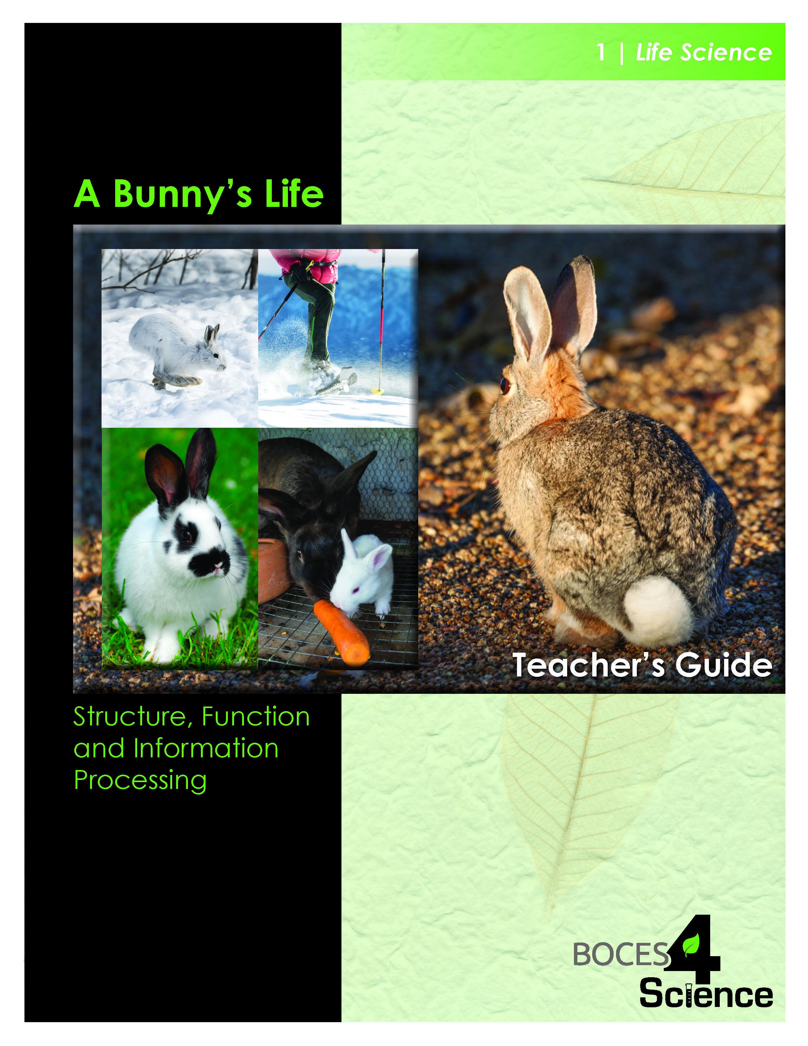 A Bunny's Life